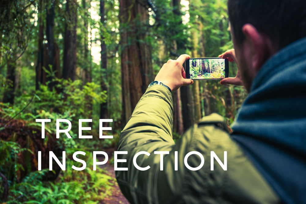 Tree Inventory and Inspection with GIS Cloud