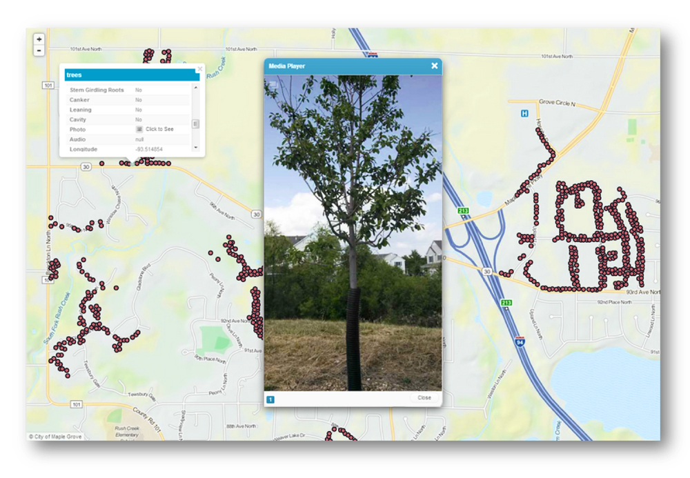Tree Inventory in the City of Maple Grove