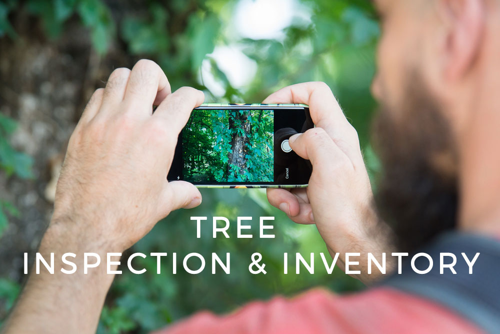 Mapping solutions for Forestry and Arborists