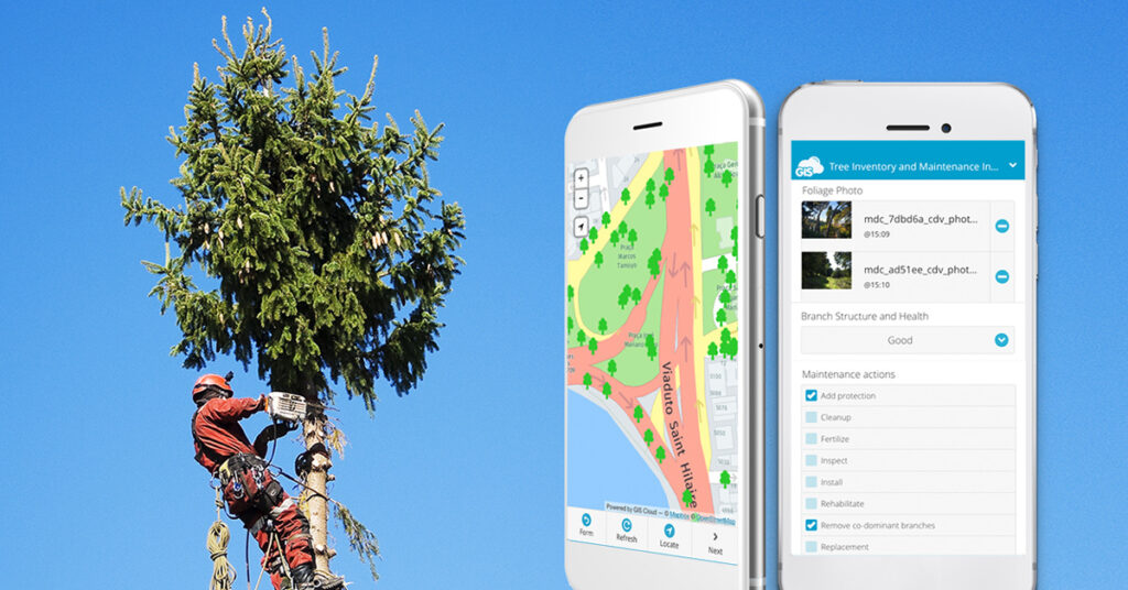 Improving Tree Inspections With Mobile Apps for Arborists (Case Study) |  GIS Cloud