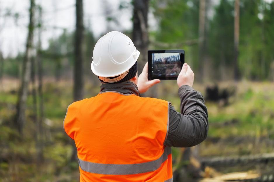 GIS-based tree maintenance